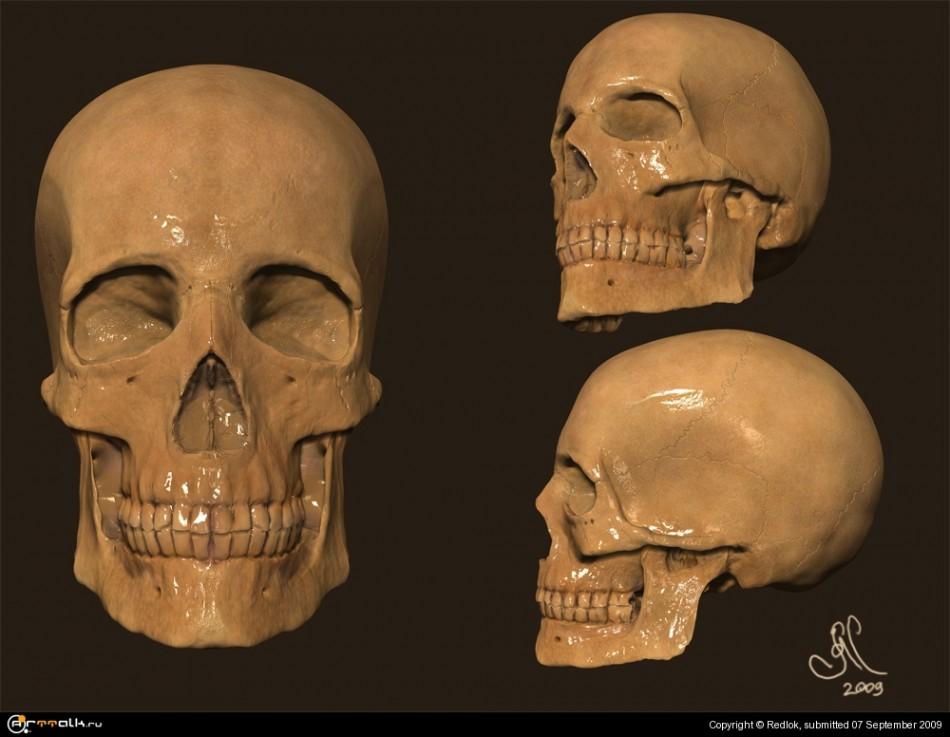 Top 10 Human Origins Discoveries in 2015  Ancient Origins